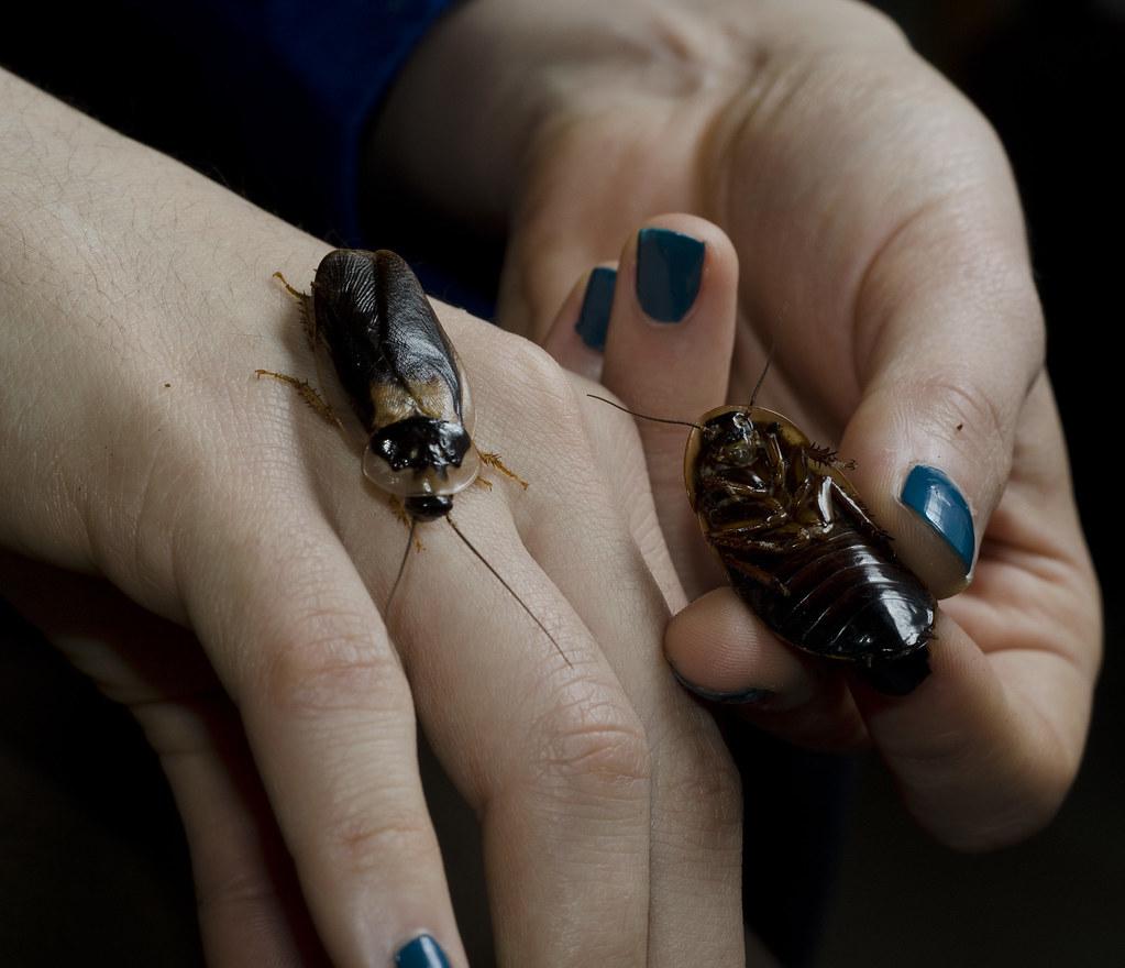 cucarachas resistentes a insecticidas