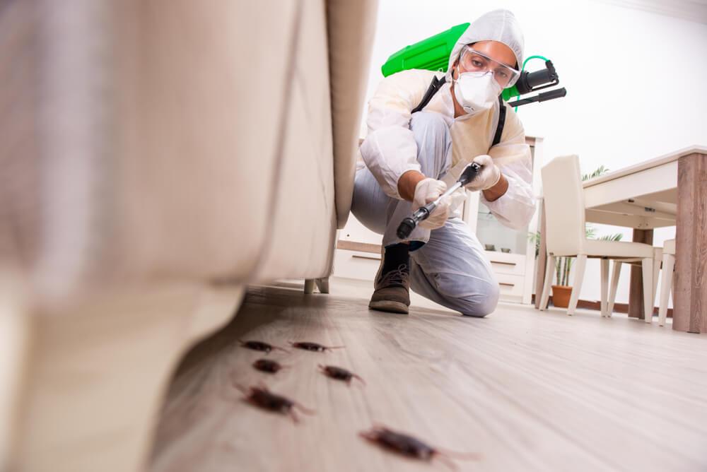 eliminar plaga de cucaracha americana