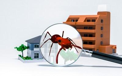 Desratización y Control de Plagas en Comunidades