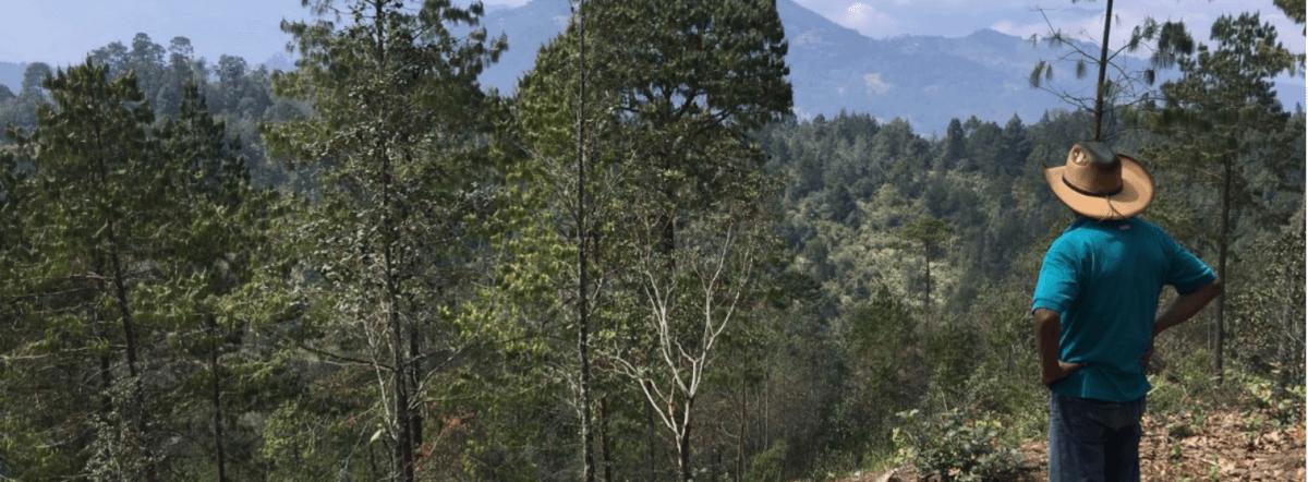 La semilla comunitaria para revivir los bosques de la Sierra de Zongolica