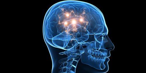 L'harmonie du cerveau