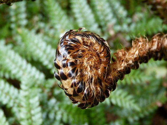Comment découvrir les pouvoirs d'une plante