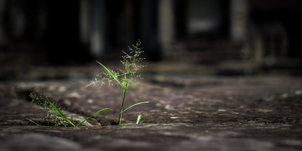 43 Comment développer la Détermination