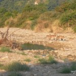 Visit to Meet the King Of Jungle – Jim Corbett National Park
