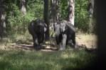 Wild Elephants of Nagarhole National Park