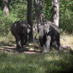 Wild Elephants of Nagarhole National Park