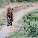 Eco Volunteer Training – Bandipur Tiger Reserve