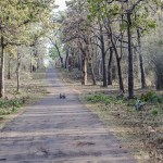 The Legend of the Gond King: The Pillars of Tadoba