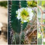 Birds, Bees, Flowers and Nature Watch at Pushkar Resorts Rajasthan