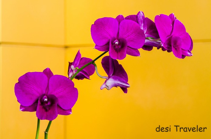 Orchid flowers at Tourism Authority of Thailand office