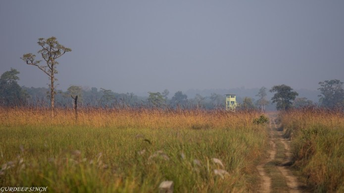 Grasslands of Dudhwa