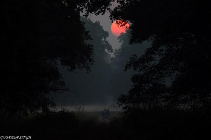 Sunrise Dudhwa National Park