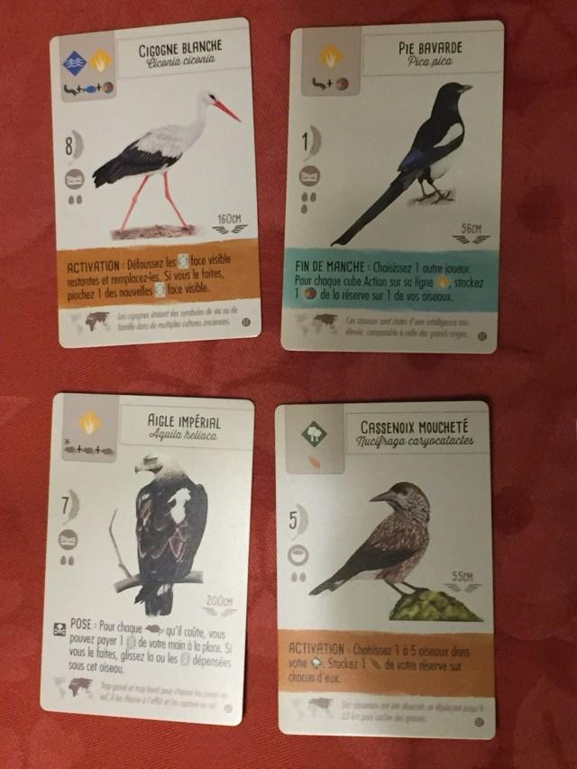 Nouvelles cartes oiseau