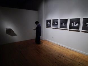 Photo BFA at Des Lee gallery