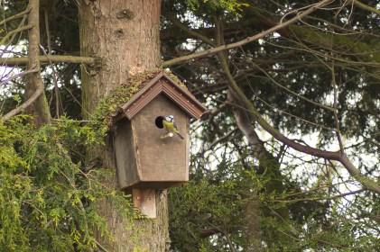 vogelhuisje dichtbij (4)