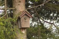 vogelhuisje dichtbij (5)