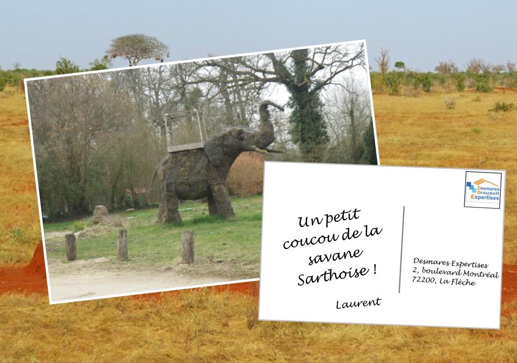 savane sarthoise elephant desmares expertises