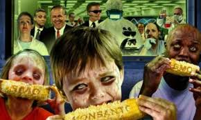 Monsanto y Maiz Transgénico.