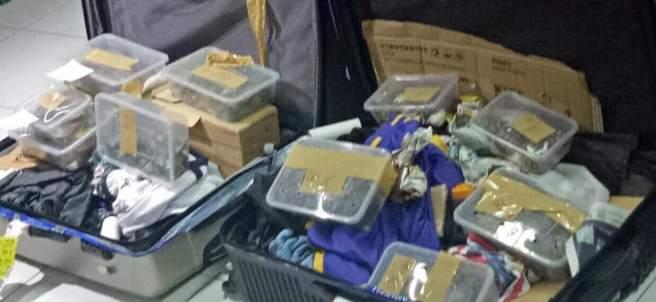 1551720671 211 Encuentran 1.500 tortugas envueltas con cintas dentro de maletas abandonadas en un aeropuerto - Encuentran 1.500 tortugas envueltas con cintas dentro de maletas abandonadas en un aeropuerto