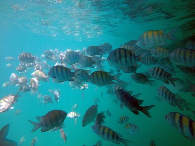 snorkel paraty passeio de barco lagoa azul