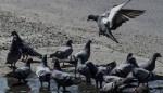 India Returns Pakistani Fisherman Habibullah's Pigeon (Video)