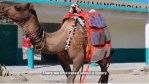 Environment Friendly Camel Library For Youth in Pakistan (Video)