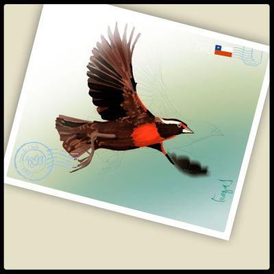 Postal Loica