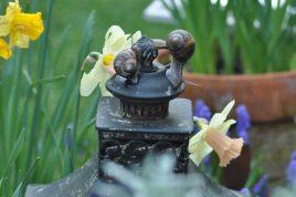 escargots narcisses