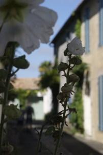 Noirmoutier @desperatecouchpotatoe