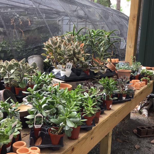 The Good Earth Garden Center May 2016 | Desperately Seeking Gina