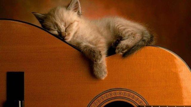 A los animales, ¿les gusta la música?