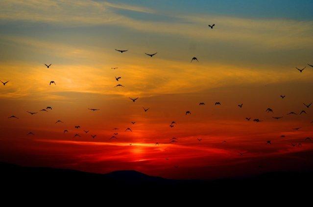 ¿Cómo se orientan las aves?