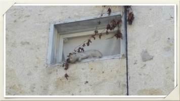 chat-au-mur-La-Romieu