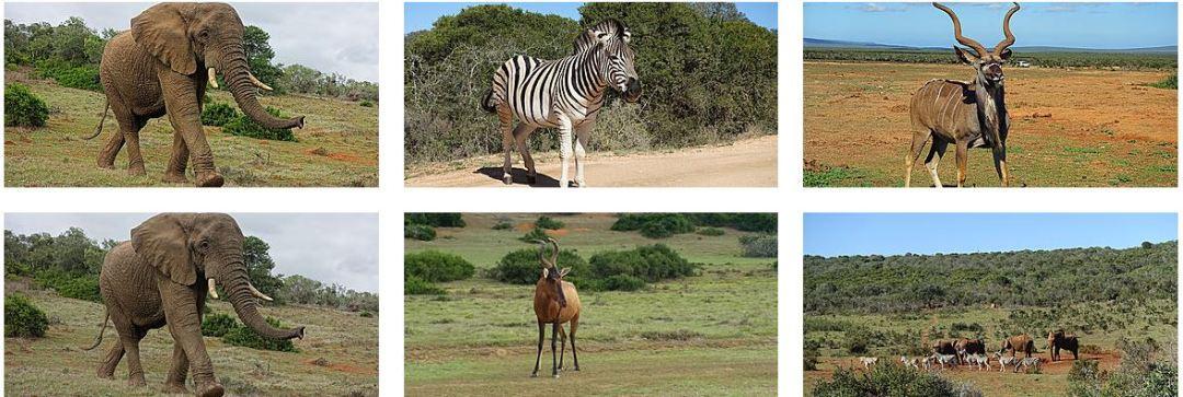 Infos pratiques Afrique du sud en pratique animaux sauvages