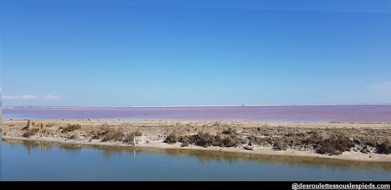 visiter la camargue étangs et marais salants
