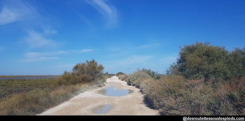 visiter la camargue à vélo chemin vers phare de la Gacholle