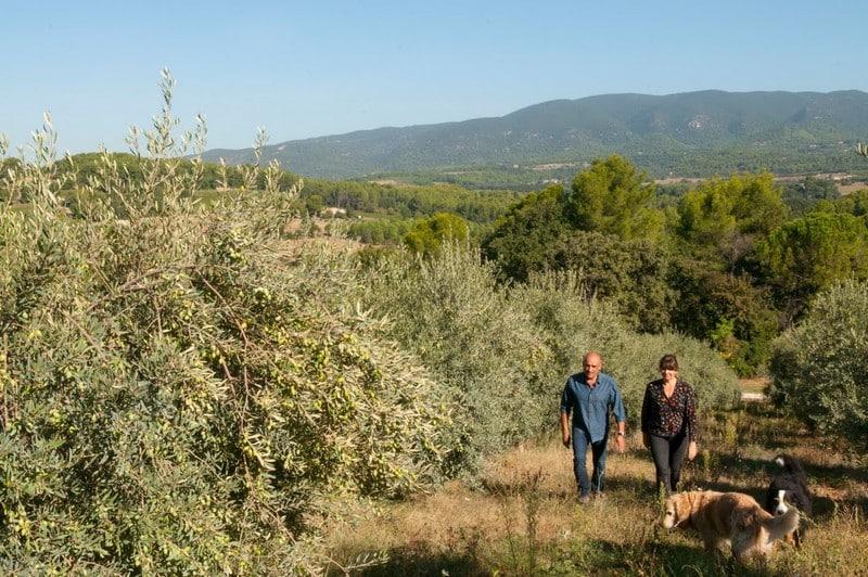 Visiter une oliveraie en provence carine et roland