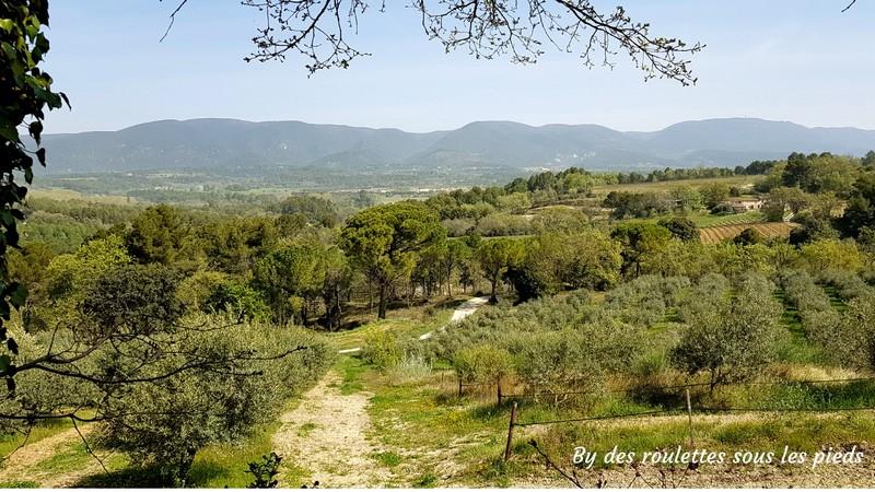 les oliviers de bastide du laval