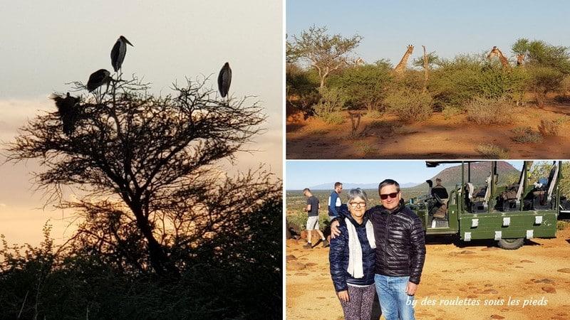 safaris en namibie game drive sundown