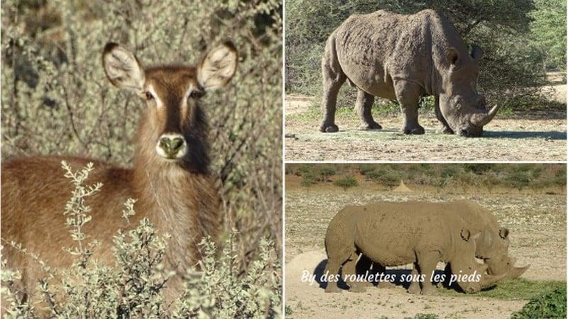 safaris en namibie la faune