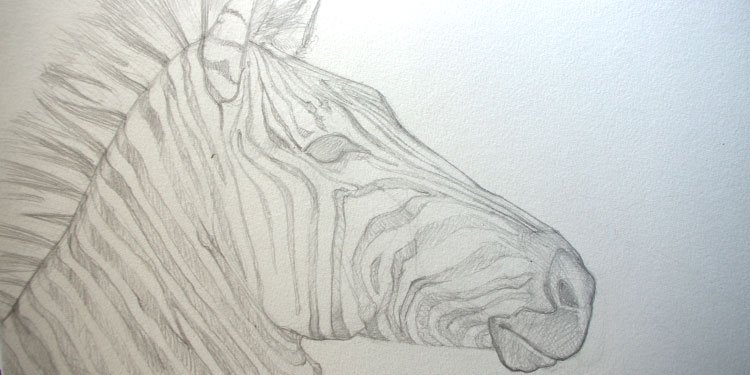 Peindre Un Zebre A L Aquarelle Realiser Un Croquis Technique De Dessin Au Crayon Apprendre A Dessiner Avec Dessin Creation