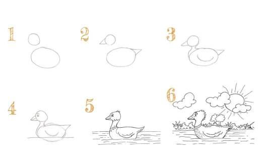 Comment dessiner un canard sur l'eau en 6 étapes ?