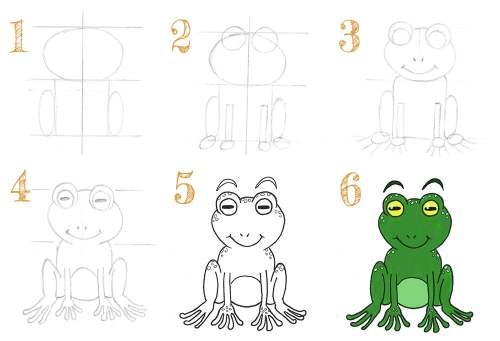 dessiner une grenouille de face étape par étape