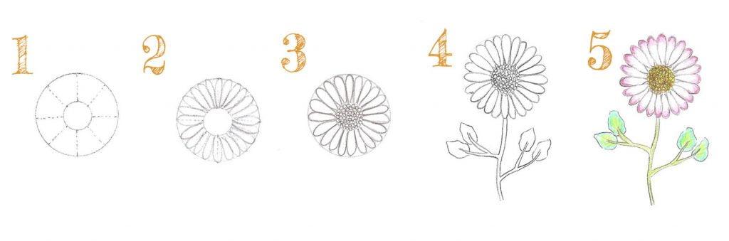 Dessiner une pâquerette de face facilement en 5 étapes