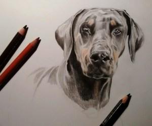 Portrait dessin d'animaux d'après photo de chien dobermann