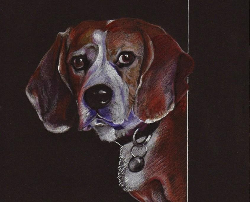 Portrait dessin d' animaux d'après photo de chien