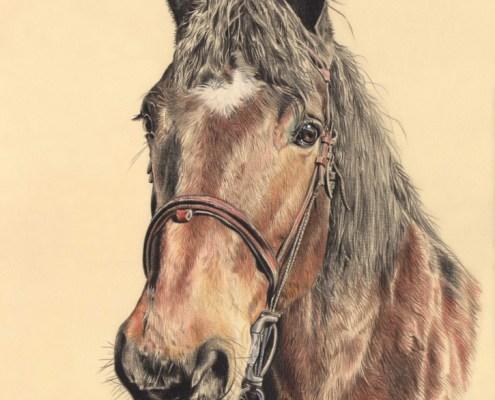 Portrait dessin d'après photo d'un cheval