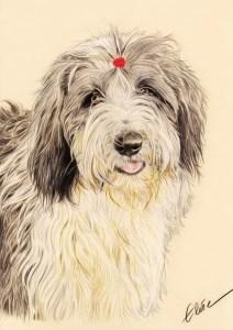 Portrait dessin d'après photo d'un chien bearded collie en couleur