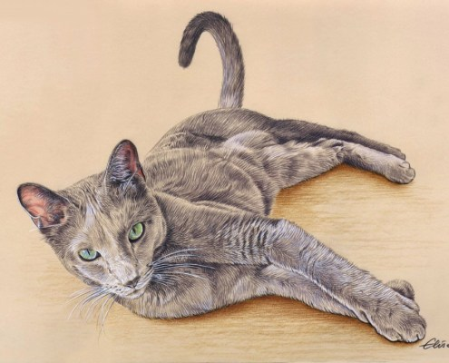Portrait dessin d'un chat allongé en couleur