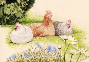 Portrait dessin de trois poules